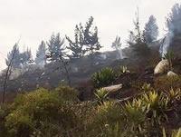 A recuperar los cerros orientales de Soacha