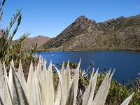 Acueducto de Bogotá destaca acciones para conservar los páramos