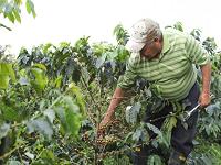 Convenio por $330 millones para fortalecer a los caficultores de Cundinamarca