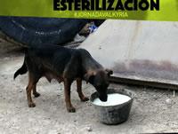 Arca Luminosa llega a Altos de la Florida a esterilizar caninos