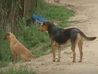 Los perros invaden Altos de la Florida en Soacha