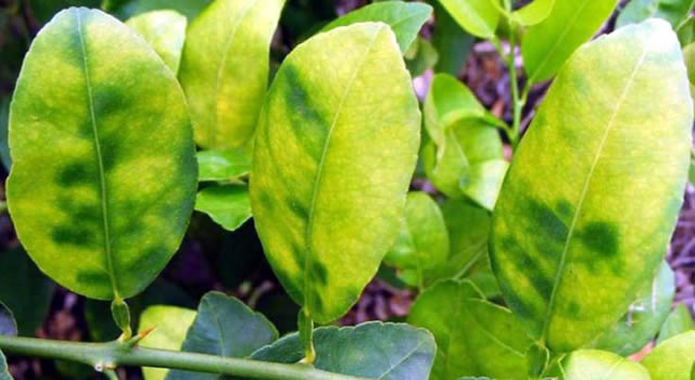 Cundinamarca tendrá jardín botánico