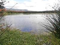 Humedal Neuta de Soacha ya tiene 19 hectáreas de espejo de agua