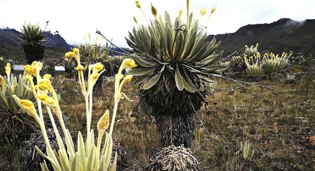 Avanzan estudios de los páramos de Cundinamarca y Boyacá