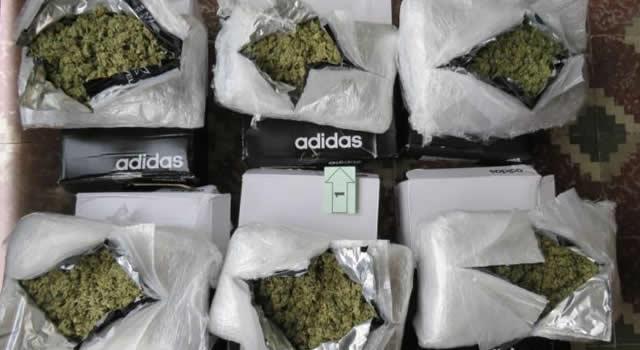 Colombia tiene casi 400 licencias para producción legal de cannabis