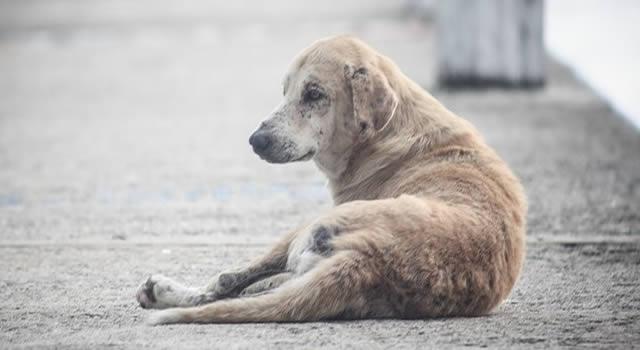 En Soacha los caninos de calle custodian el Comando  de Policía