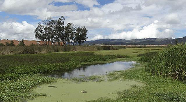 EAAB cierra 200 conexiones erradas que contaminaban el humedal Juan Amarillo