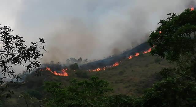 Grandes pérdidas ambientales en Girardot por incendio forestal