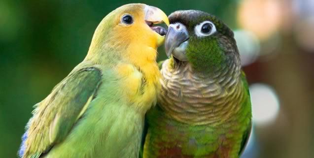 Niños y jóvenes bogotanos podrán participar en concurso 'A vuelo de pájaro'