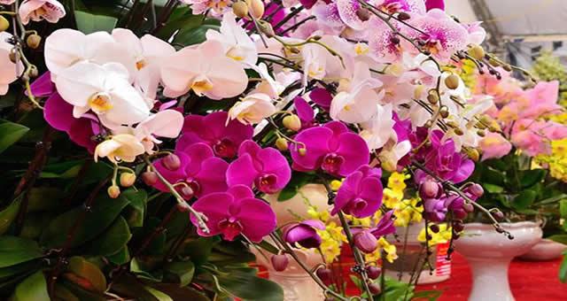 En el Jardín Botánico se realizará la Exposición Nacional de Orquídeas