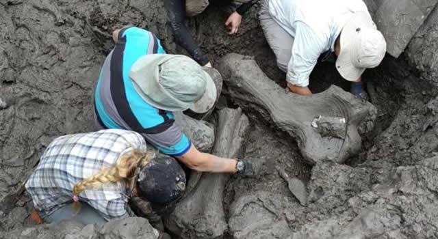 Científicos regresan a Anolaima para analizar restos de un mastodonte