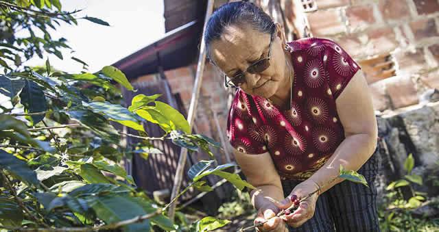 Mujeres cafeteras de Viotá produjeron edición especial 'Juan Valdéz'
