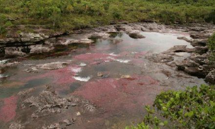 Cerrado el ingreso a Caño Cristales por inicio de temporada seca