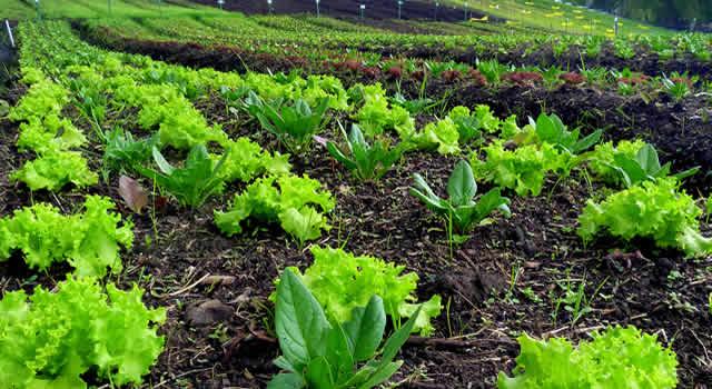 Ojo con las verduras y hortalizas que consume
