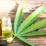 Un litro de aceite de cannabis cuesta cien millones de pesos