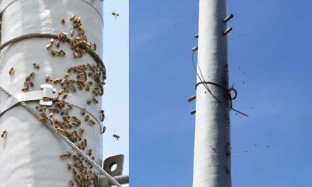 Enjambre de abejas amenaza seguridad en San Mateo Soacha
