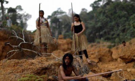 Brasil  aumenta explotación ilegal de madera en amazonía colombiana