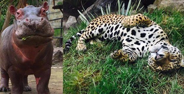A punto de hundirse proyecto que prohíbe experimentos con animales en Colombia