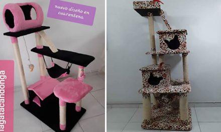 Gimnasios para gatos, emprendimiento que solventa la economía de una familia en Soacha