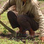 Campesinos de Soacha y Sibaté  podrán  participar en programa de conservación ambiental