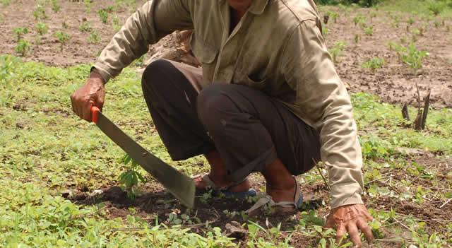 Gobierno lanza Líneas Especiales de Crédito para el sector agropecuario
