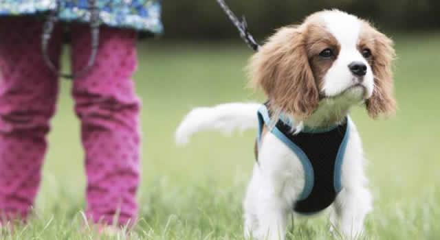 ¿Por qué el 'Pico y Género' no aplica para sacar a pasear a las mascotas?