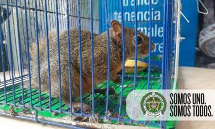 Ardilla fue rescatada en Ciudad Verde soacha