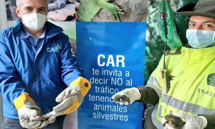 Policía ambiental rescata animales silvestres en 'Torrentes' Soacha