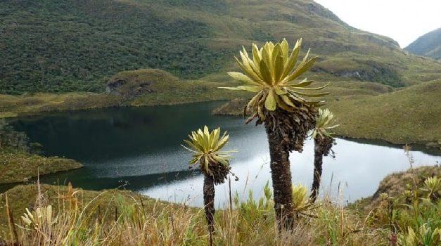 Concurso virtual por el medio ambiente se vivirá en Cundinamarca