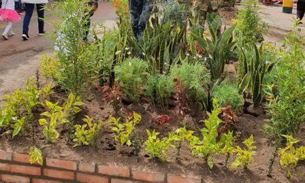 Plantas ornamentales cambian la cara de la calle 13 de Soacha