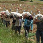 Cundinamarca enviará papa a San Andrés como apoyo a los damnificados