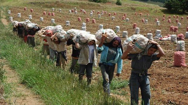 Bogotá y Cundinamarca firman pacto para garantizar seguridad alimentaria en la región