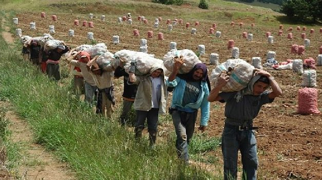 65.000 toneladas de papa serían importadas este año