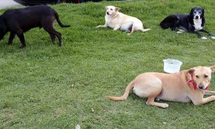 Urgente llamado para que autoridades protejan a cuatro perritos que rondan un sector de Soacha