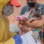 Aumenta maltrato de mascotas en Bogotá