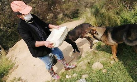 La mujer que lucha contra el abandono y maltrato animal en Soacha