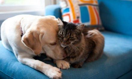 """""""Amor Concentrado"""" la iniciativa que busca proteger animales de la calle"""