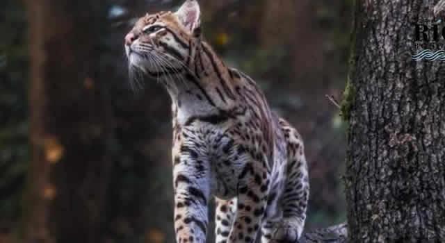 Campaña para proteger la vida silvestre en las vías de Cundinamarca