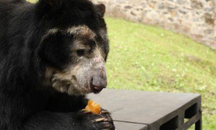 CAR y Gobernación lanzan salvavidas a los zoológicos de Cundinamarca