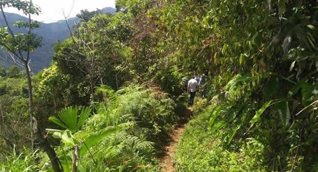 Ordenan que haya Zonas de Reserva campesina en Cundinamarca