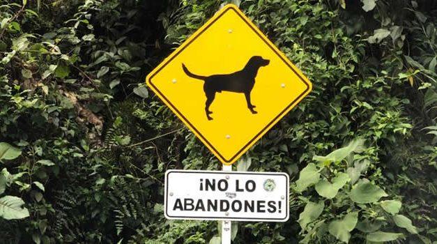 Pandemia también golpeó a perros y gatos, Soacha es el municipio donde más animales se abandonan