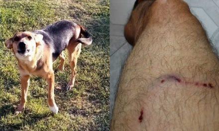 Jauría de perros ataca a residente de Ciudad Verde