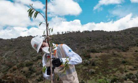ANI compensó social y ambientalmente a Soacha y Sibaté con siembra de árboles