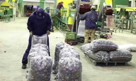 1.200 toneladas de papa comprará la Gobernación de Cundinamarca para apoyar a campesinos
