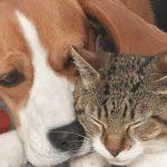 Campaña de esterilización de mascotas a bajo costo en Soacha