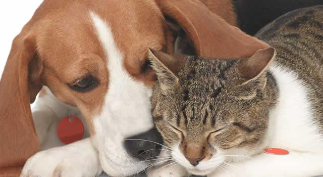 Crece robo de mascotas en Bogotá para extorsionar a sus dueños