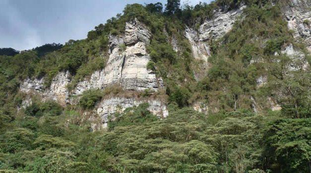 Colombia perdió 171.685 hectáreas de bosque por deforestación en 2020