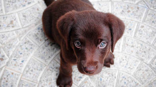 Este jueves hay vacunación de mascotas puerta a puerta en un sector de Soacha
