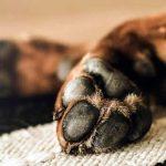 Polémica en Soacha por disparo de policía a un canino