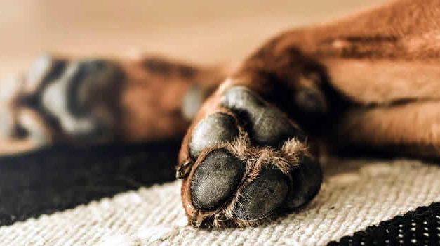 Hombre que dejó ciego a un perro en Zipaquirá fue enviado a la cárcel